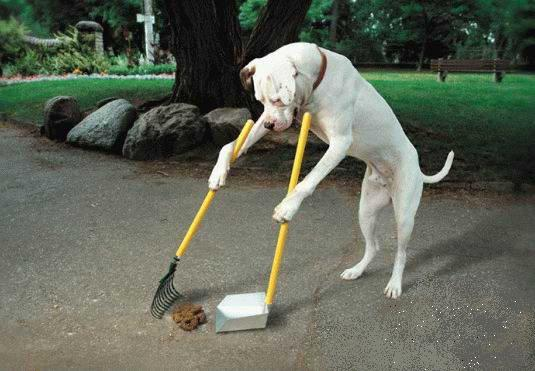 Az intelligens kutya
